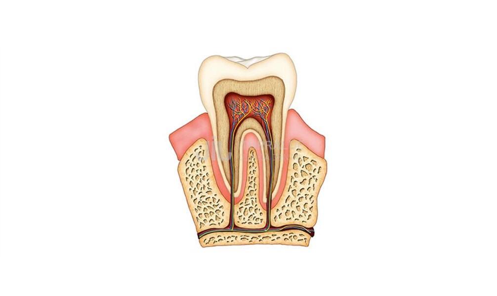 endodoncia-tratamientos